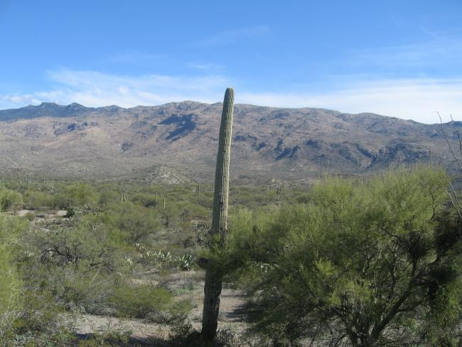 Cactus Rd looking E Rincon Mtns